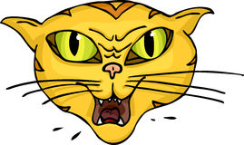Cat Hiss. Angry green-eyed striped cat hisses and spits Stock Image