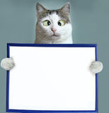 Cat hold blank empty paper sheet in frame. Close up squint funny photo royalty free stock image