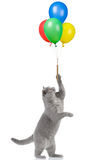 Cat holding balloons royalty free stock photo