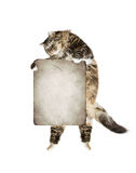 Cat holding  banner, isolated on white Royalty Free Stock Photo