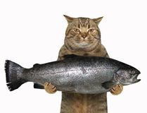 Cat holds a big trout. The cat is holding a big trout. White background stock images