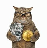 Cat with bitcoin and dollars. The cat is holding a bitcoin in one paw and dollars in other. White background royalty free stock photo