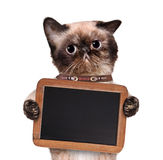 Cat holding a blackboard. Royalty Free Stock Photography