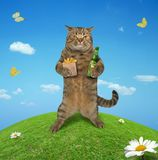 Cat in meadow 1 stock photography