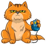 Cat Holding Computer Mouse. Grumpy Cat Holding Computer Mouse Cartoon Vector Royalty Free Stock Photos