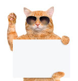 Cat holding in his paws white banner. Royalty Free Stock Photography