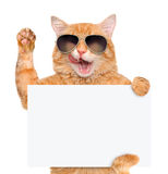 Cat holding in his paws white banner. Stock Images