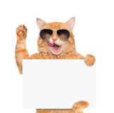 Cat holding in his paws white banner. Stock Image