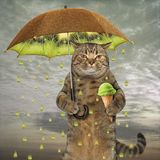 Cat with a kiwi umbrella. The cat is holding a kiwi umbrella in one paw and fruit ice cream in other stock image
