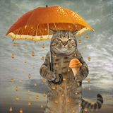 Cat with an orange umbrella. The cat is holding an orange umbrella in one paw and fruit ice cream in other royalty free stock photography