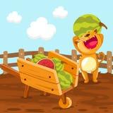 Cat Holding Watermelon Royalty Free Stock Photo