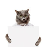 Cat holding a white banner Royalty Free Stock Photo