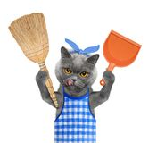 Cat holds broom and scoop in paws. Isolated on white Royalty Free Stock Photos