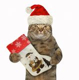 Cat holds a Christmas boot 2 stock photo