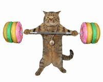 Cat with donut barbell. The cat holds a donut barbell. White background stock images