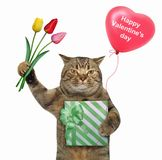 Cat holds a green gift box and tulips stock photography