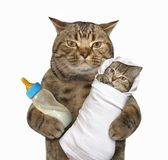 Cat with his kitten. The cat holds his kitten and a bottle of milk. White background stock photography