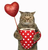 Cat with a polka dot cup 3 Stock Photography