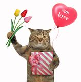 Cat holds a red gift box and tulips royalty free illustration