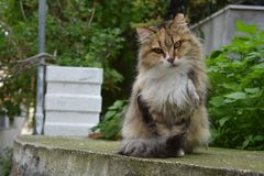 Cat on the Island of Poros royalty free stock photography