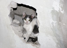 Cat in the Hole. Royalty Free Stock Images