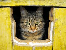 Cat in a hole Stock Images