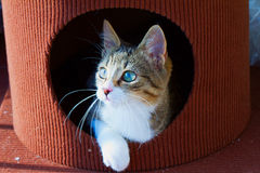 Cat in a hole Stock Photo