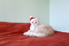 Cat With Holiday Background Stock Photography