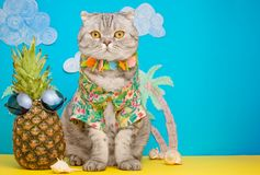 A cat on holiday in a Hawaiian shirt with pineapples. On the beach with malma. A concept of rest, relaxation, vacation.  stock photo