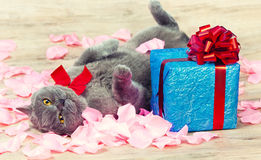 The cat holiday Stock Image