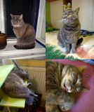 Cat Home Gray Fotos de archivo