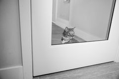 Cat at home. Cat on the prowl in apartment Royalty Free Stock Image
