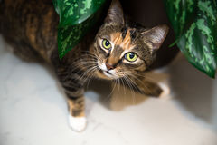 Cat at home Royalty Free Stock Image