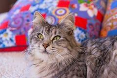 Cat home Royalty Free Stock Photos
