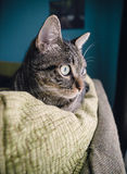 Cat at home royalty free stock images