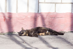 Cat. Homeless cat lie on the ground Stock Photo