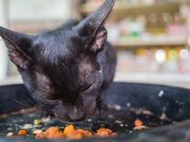 Cat Homeless negra Imágenes de archivo libres de regalías
