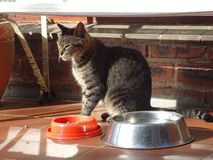 Cat on a Hot Tile Porch. Stray cat sitting on the porch in the sunshine outside a village store Royalty Free Stock Images
