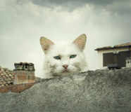 Cat on the hot tin roof Royalty Free Stock Photography