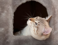 Cat in the house. Stock Images