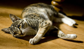 Cat in house Royalty Free Stock Photography