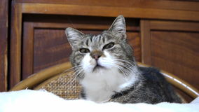 Cat stock footage