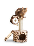 Cat house and the cat. Royalty Free Stock Images
