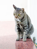 Cat at house Royalty Free Stock Photo