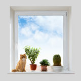 Cat and house plants on the windowsill Royalty Free Stock Photo