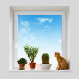 Cat and house plants on the windowsill Stock Photo