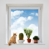Cat and house plants on the windowsill. Spring royalty free stock photography