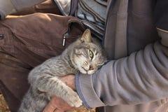 Cat hugging man Royalty Free Stock Photo