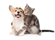 Cat hugging Pembroke Welsh Corgi puppy. isolated on white backgr Stock Photos
