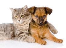 Cat hugging puppy, isolated on white background.  stock photos